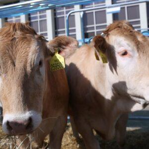 międzynarodowe targi produkcji zwierzęcej